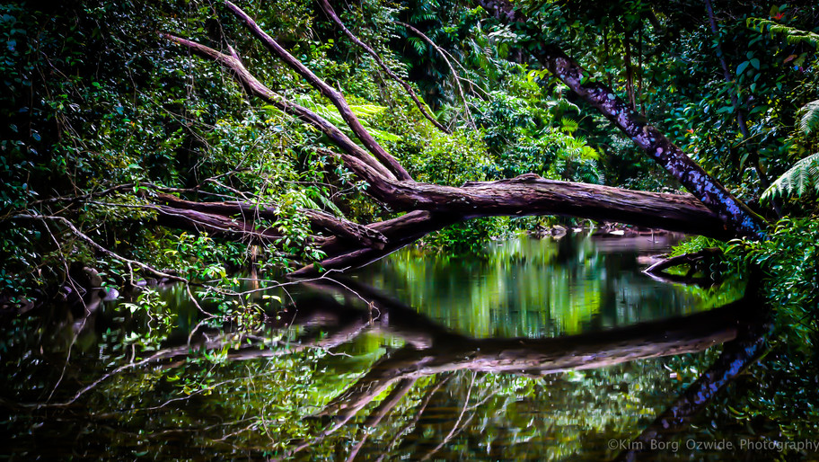 Rainforest Wonder