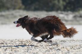 Beach Sprint