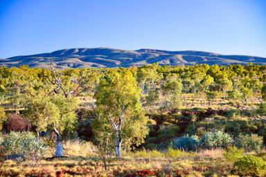 Our Beautiful Landscape