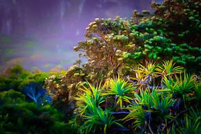"""Hazy Day Pandanus Palms"""