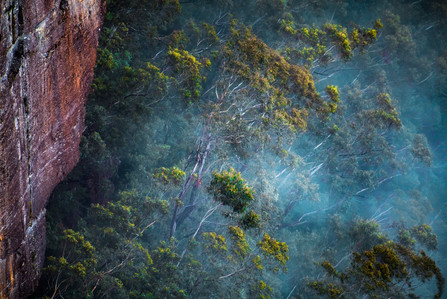 """Ghost Gums in the Mist"""