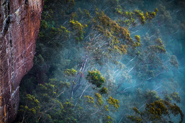 """""""Ghost Gums in the Mist"""""""