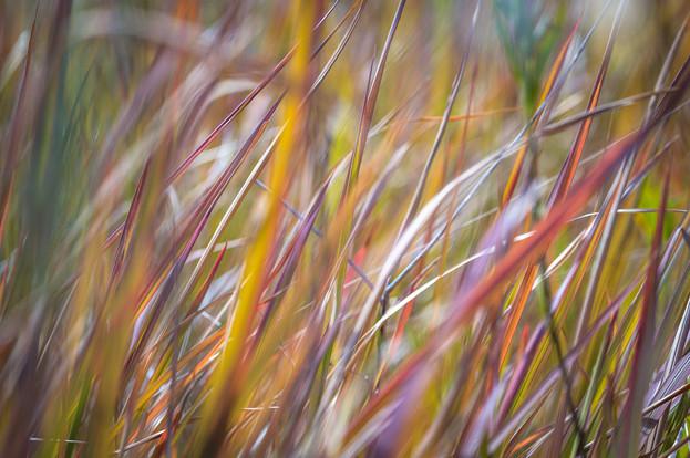 """""""Bunya Grass"""""""