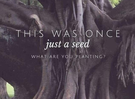 What are you planting 🌸