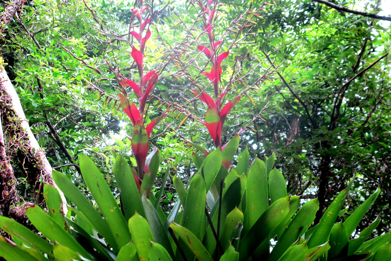 Flora local - bromélias