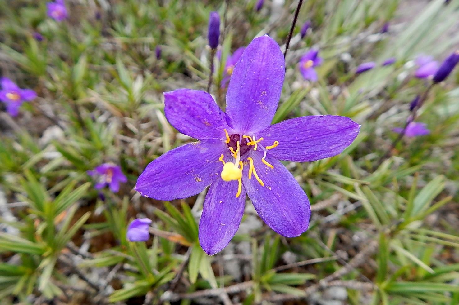 flora local