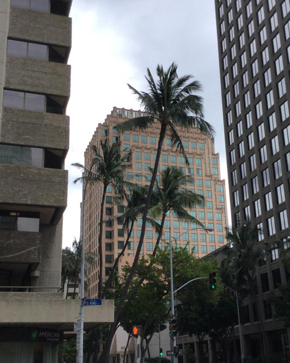 downtown honolulu hawaii has coconut trees