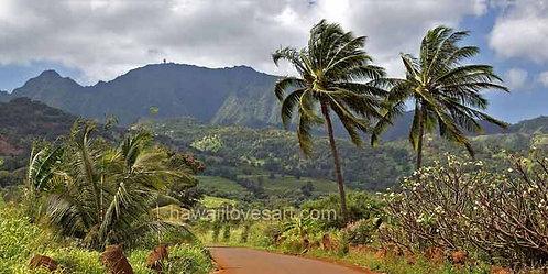 14x28 Panorama Kaala Palms