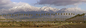 california mountain panoramas mt san gorgonio and palm trees in redlands california
