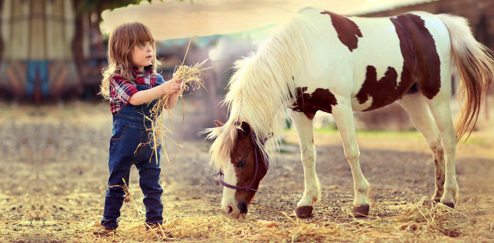 סוס מומר ב''ה.jpg