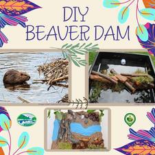 DIY Beaver Dam