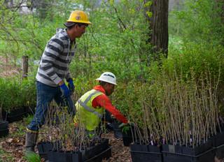 Conservation efforts underway at Slab Cabin Run