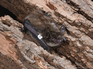 ClearWater Conservancy Conserves Crucial Bat Habitat