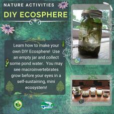 DIY Ecosphere
