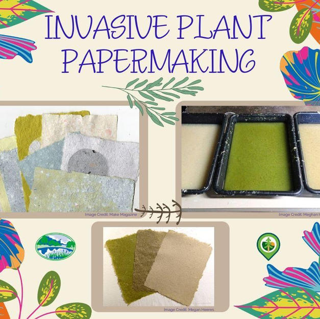 Invasive Plant Papermaking