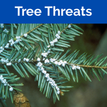 Threatened Trees