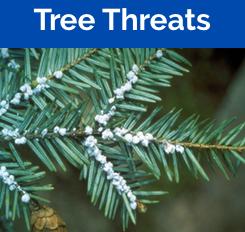 Threatened Trees