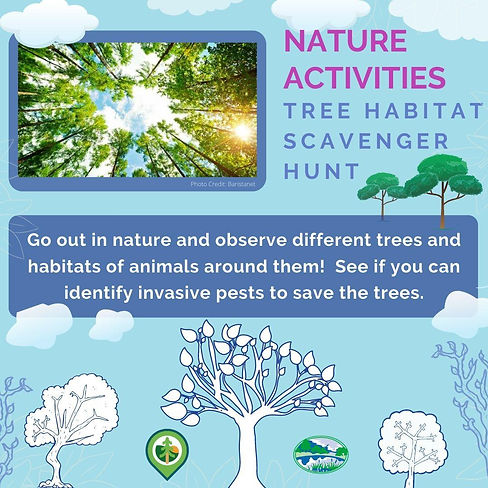 Tree Habitat Scavenger Hunt
