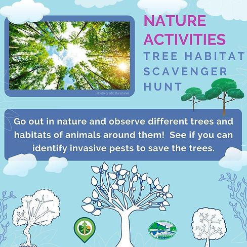 Tree Habitat Scavenger Hunt