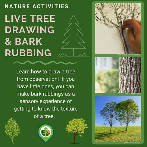 Live Tree Drawing & Bark Rubbing