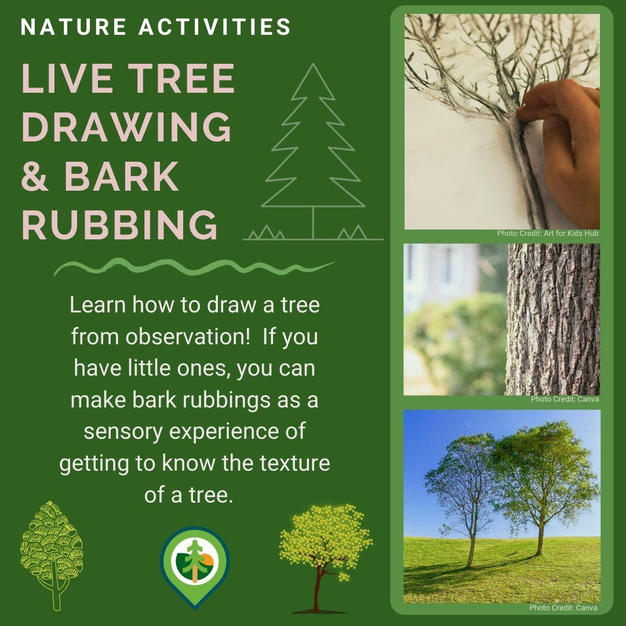 Live Tree Drawing and Bark Rubbing