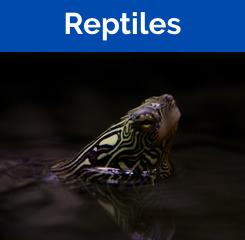 Rare Reptiles