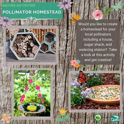 Pollinator Homestead