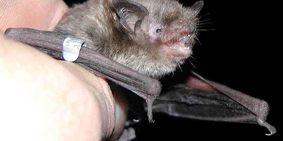 Adventures in Conservation: Night Critter Walk