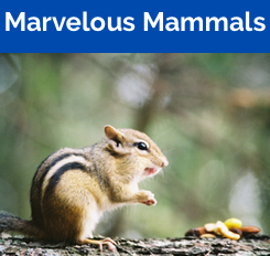 Marvelous Mammals