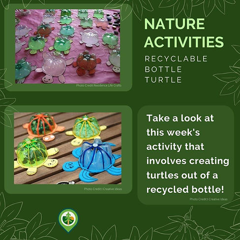 Create a Recyclable Turtle!