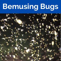Bemusing Bugs