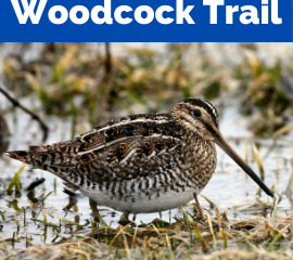 Walk Like a Woodcock
