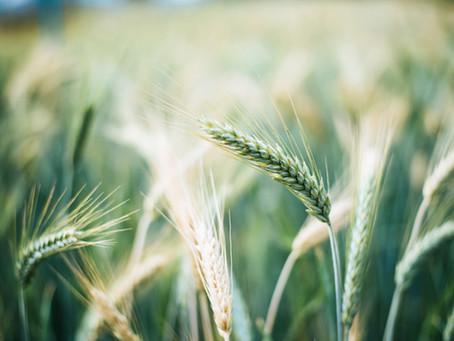 """Inicio del Proyecto """"Valorización Cultivos Extensivos Ecológicos"""