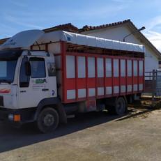 camionganado2.jpg