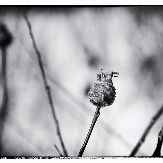 © Marie-Josée Marcotte