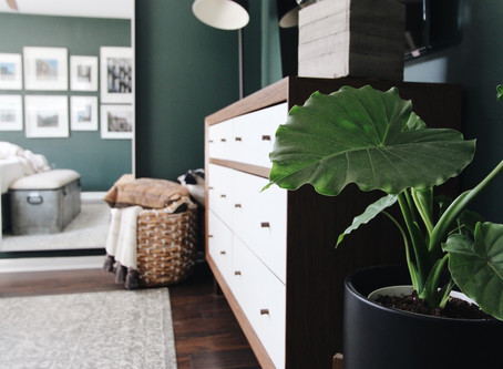 House Plants & Planters That Look Great in Your Space