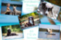 Flyer1DRUCK.jpg