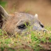 Hyena Sighting on Safari