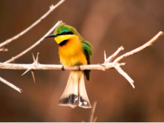 Birding South Luangwa