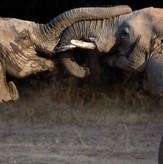 Elephant Sighting South Luangwa Safari