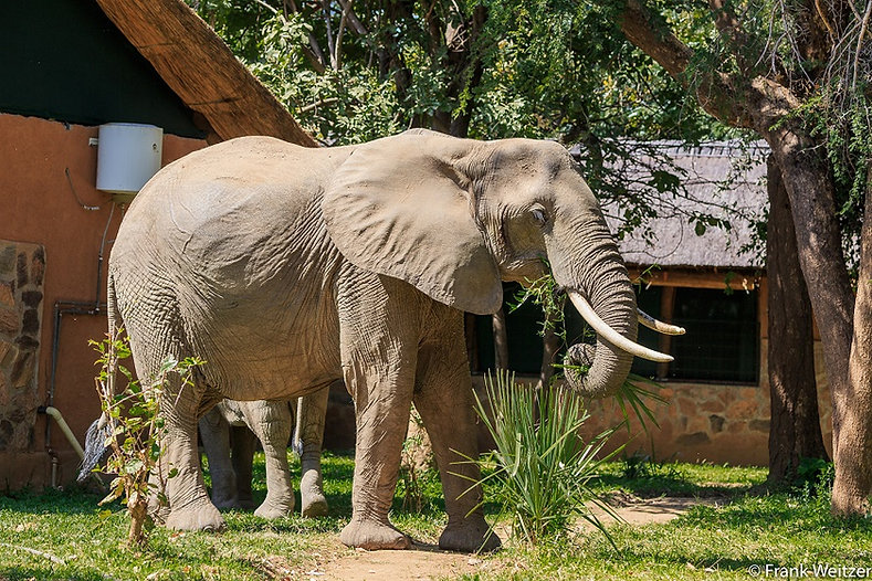 Elephant in Camp.jpg