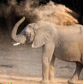 Elephant Sighting South Luangwa
