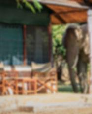 Elephants by Chalet.jpg