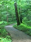 Conkles Hollow Path Clean (1).jpg