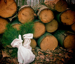 Pine Sapling with Logs_edited.jpg