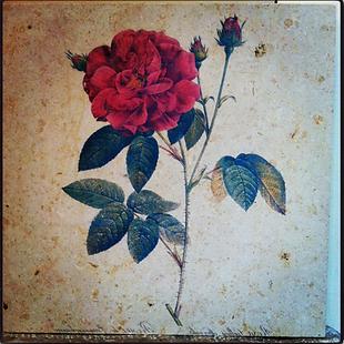 Rosa de Sant Jordi en piedra Solnhofen