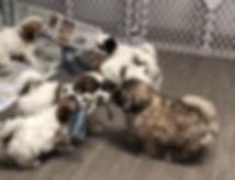 puppies with twist.jpeg
