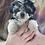 "Thumbnail: Teddy-chon, Male, ""Bruno"""