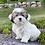 """Thumbnail: Teddy Bear, Female """"Lacy"""""""