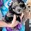 """Thumbnail: Shipoopoo  (Teddy Bear) , Female  """"Tesla"""""""